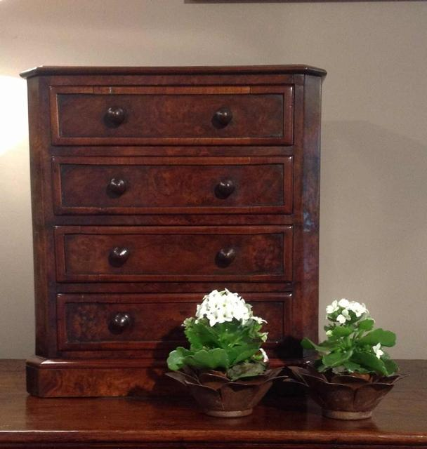 English 19thC burr walnut mini- chest of drawers